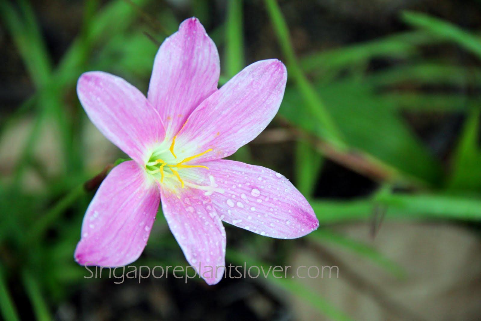 Singapore Plants Lover: January 2012
