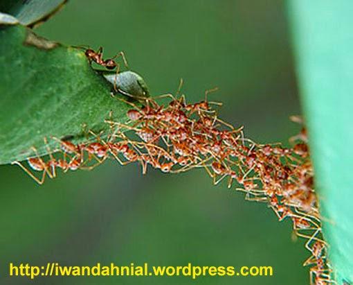 Apa yang dilakukan semut