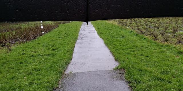 sade, sateenvarjo, pisarat, ruohikko