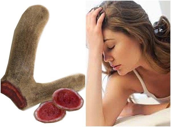 Tác dụng của nhung hươu giúp phụ nữ bồi bổ cơ thể