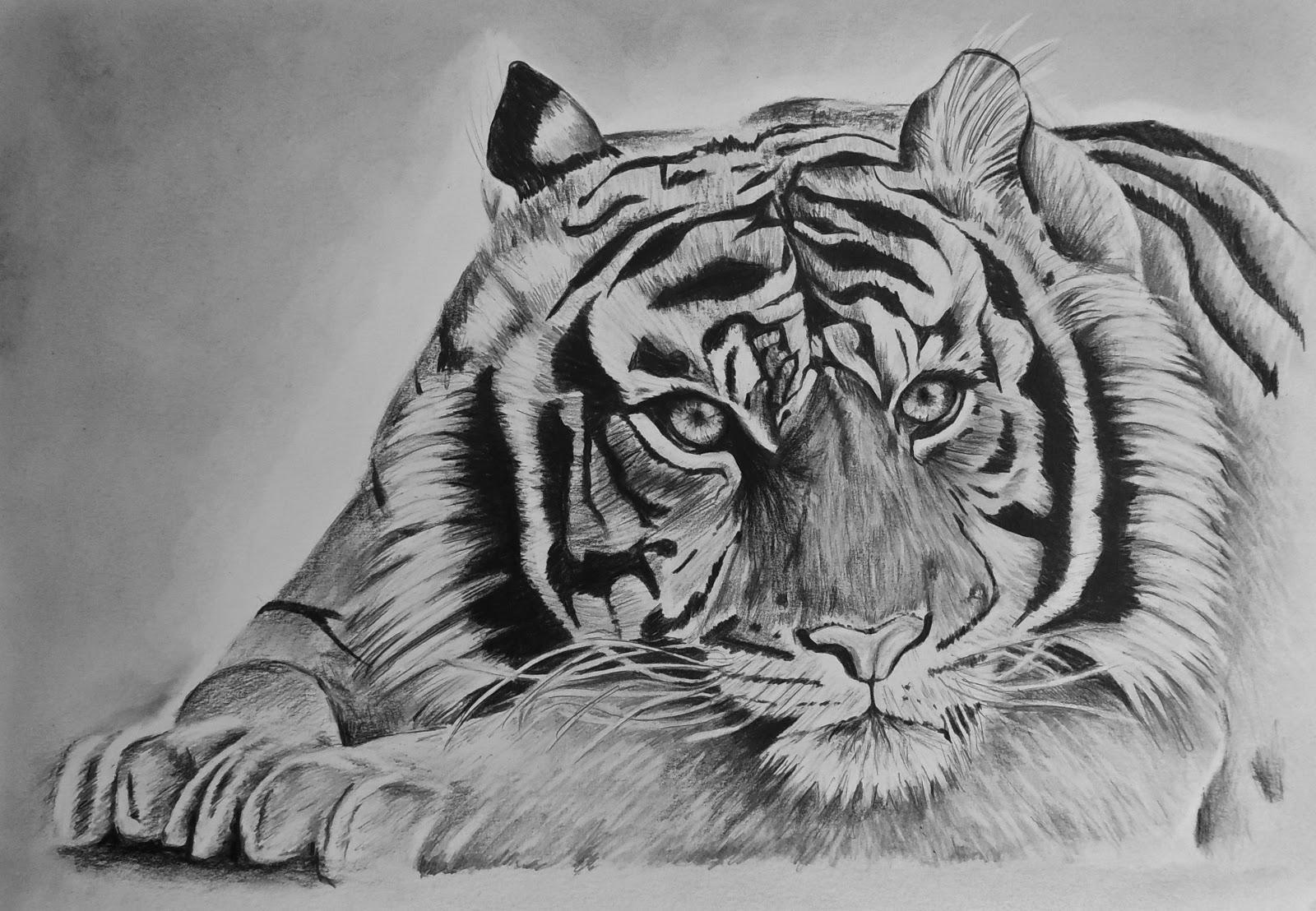 kleurplaat een tijger ausmalbild tiger baby