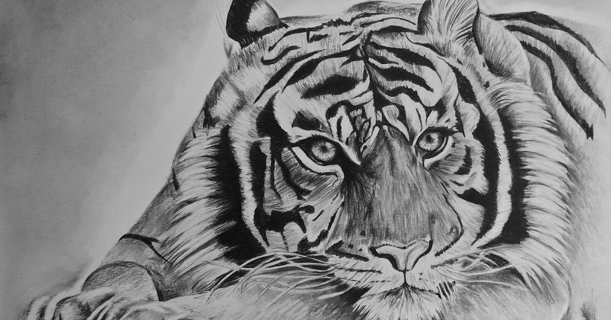 michael hoffmans potlood tekening a4 tijger
