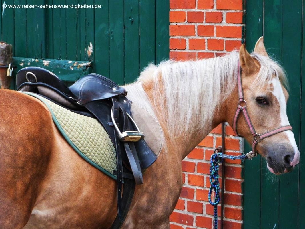 Pony mit Sattel, gesatteltes Pferd