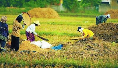 Arti Agraris