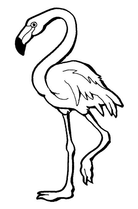 ذكريات استقبال يواجه رسمة طاووس للتلوين Virelaine Org