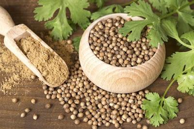 Les graines de coriandre