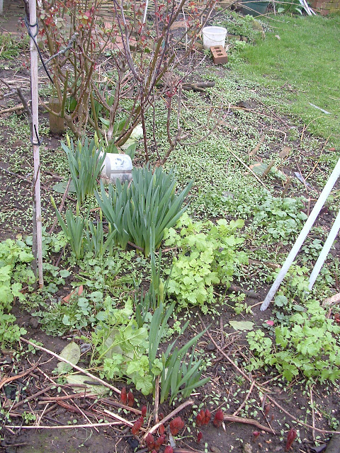 Photo of a garden bed in early spring with lots of seedlings