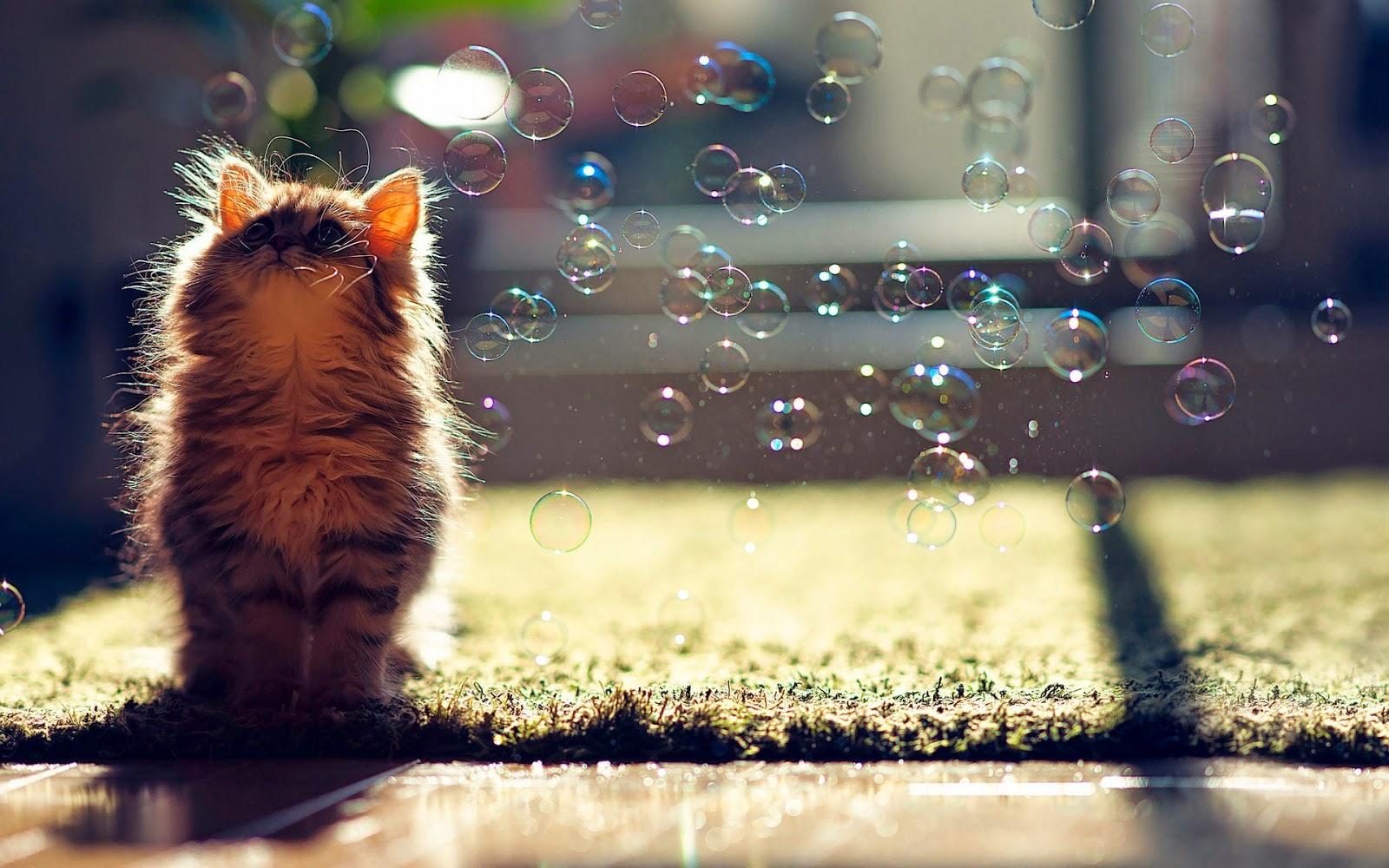 - Cute kitten wallpaper free download ...
