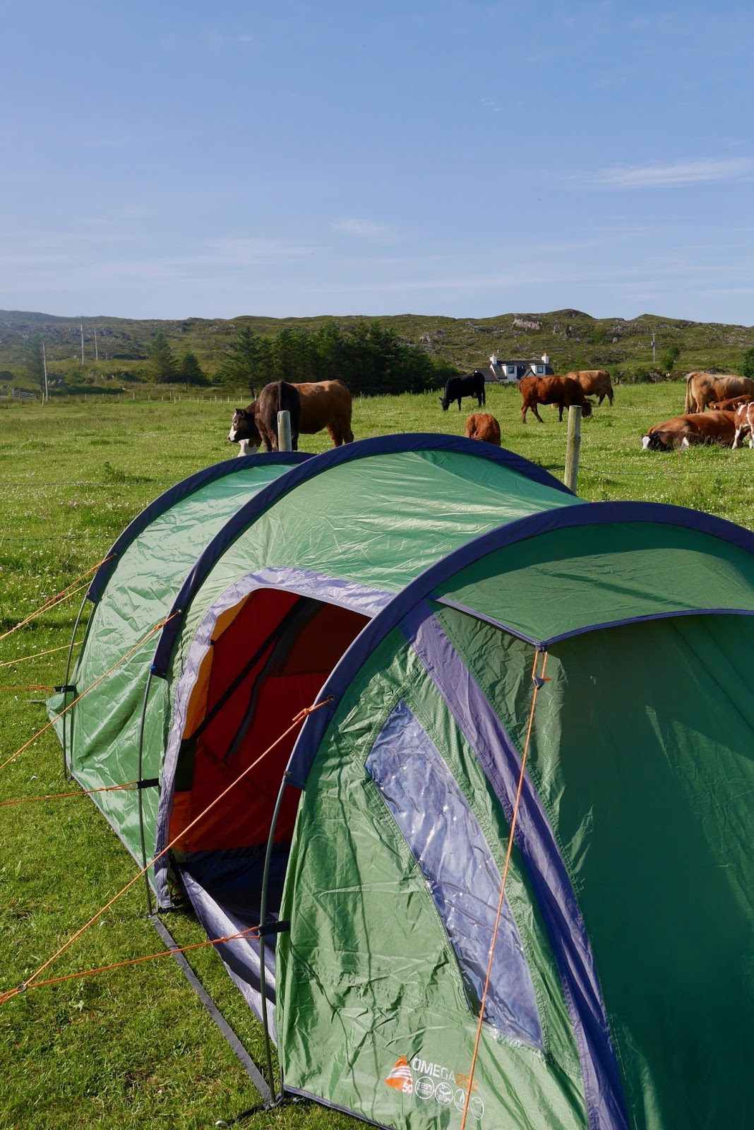 Camping in Arisiag with the cows