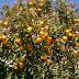 دراسة جدوى كاملة استصلاح وزراعة 100 فدان بطريق العلمين من الارضي الصحراوية