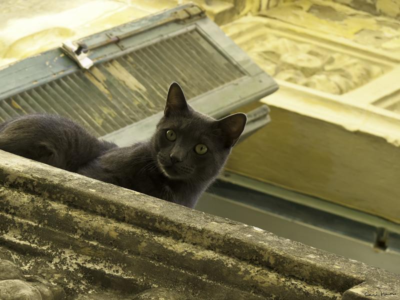 El balcón de la Medina.