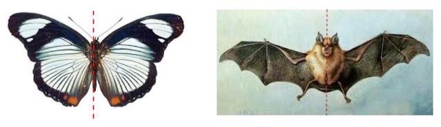 binatang-dengan-bentuk-simetris