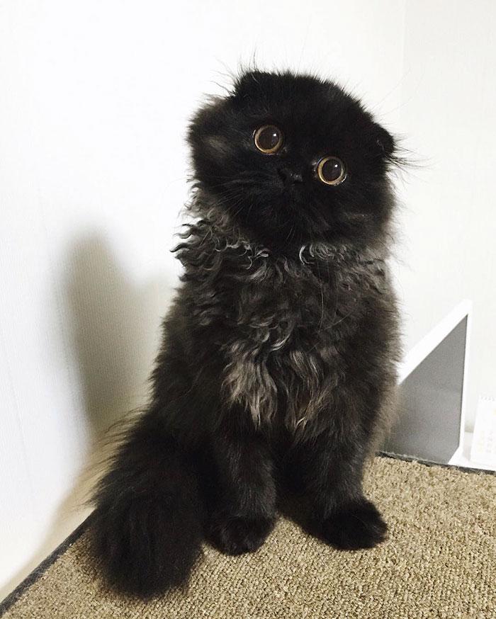 Gimo, o gato de olhos grandes mais fofo da história