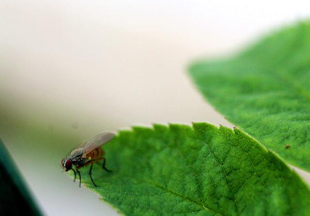 Hyönteiselämää, Fotodays
