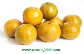 Jual Bibit jeruk siam | jual bibit jeruk siem | Tanaman jeruk siam | tempat bibit jeruk siam unggul | jeruk siam unggul | budidaya jeruk siam | menanam jeruk siam unggul | teknik menanam jeruk siam | manfaat jeruk siam | | perbanyakan bibit jeruk siam | syarat tumbuh jeruk siam | jeruk siam jeruk manis