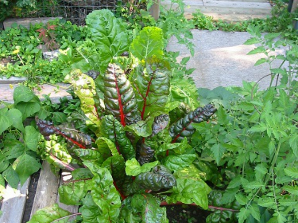 Lanark County Master Gardeners