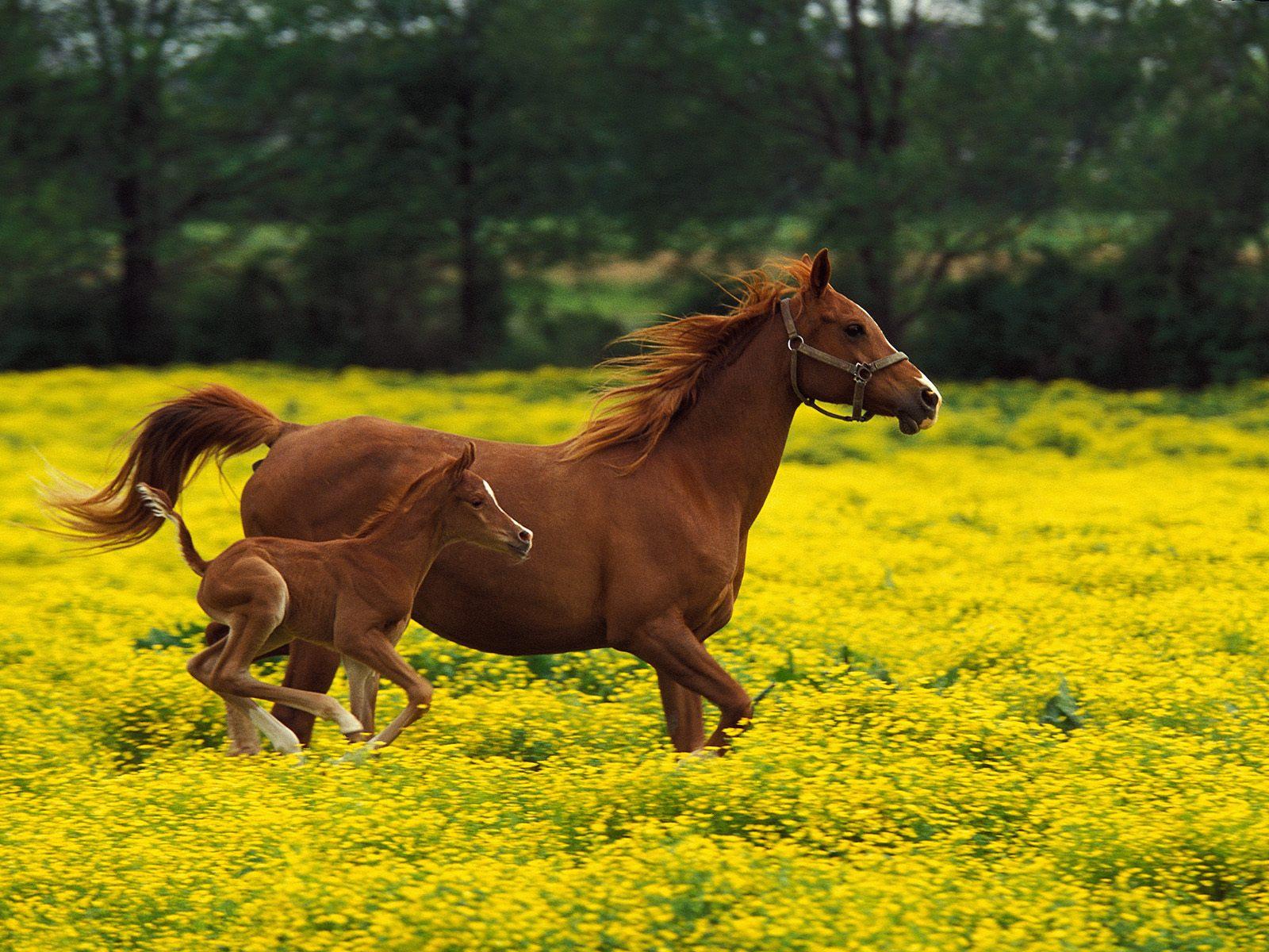 Top   Wallpaper Horse Yellow - The-best-top-desktop-horse-wallpapers-18  Best Photo Reference_661094.jpg
