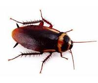 Pest Control Dapto