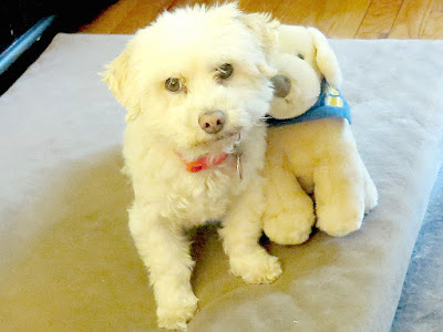 Stuffed animals can be used help teach kids about how to properly care for dogs and keep pets safe.
