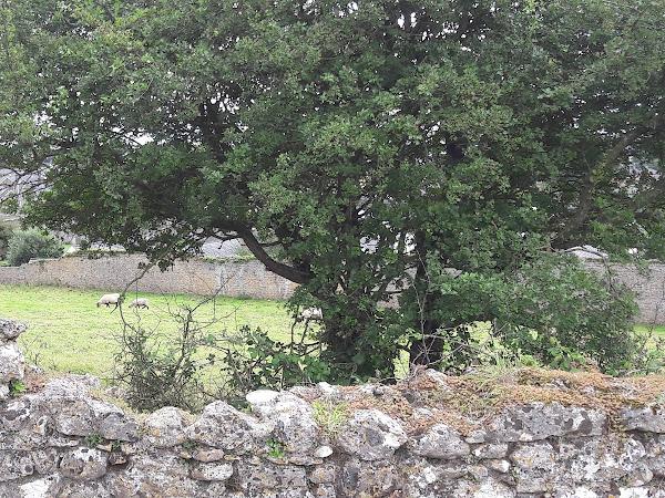 Road Trip en Irlande #2: Sur la route du Kerry