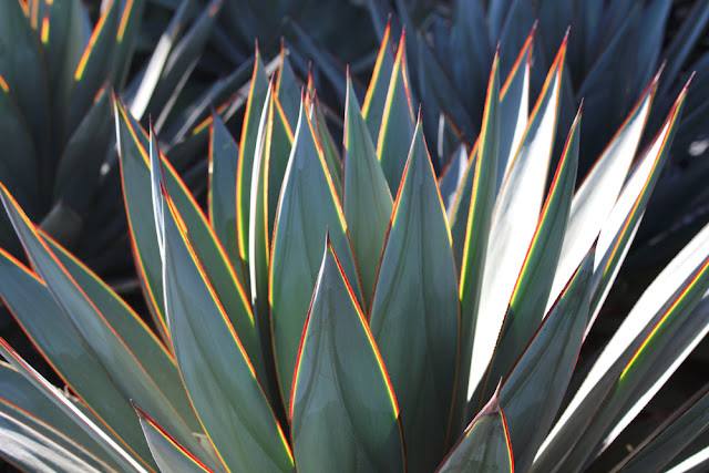 Santa Monica plants - weekend in Los Angeles, travel blog