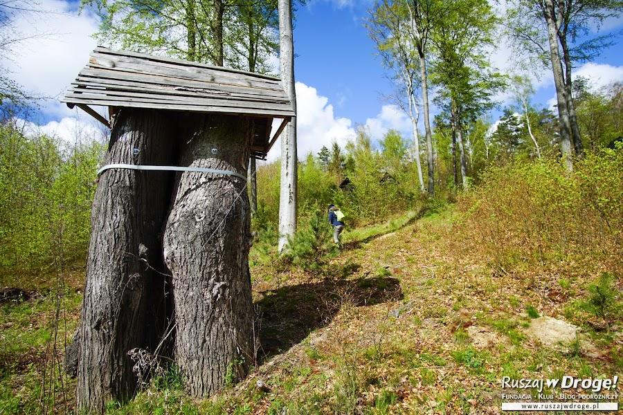 Park pachnicy dębowej w Tolkmicku