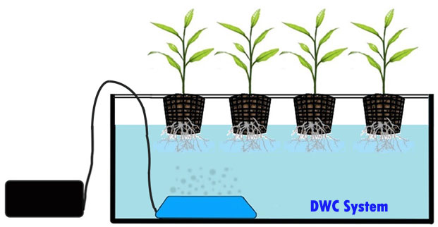 Simple Deep Water Culture Hydroponics System at home