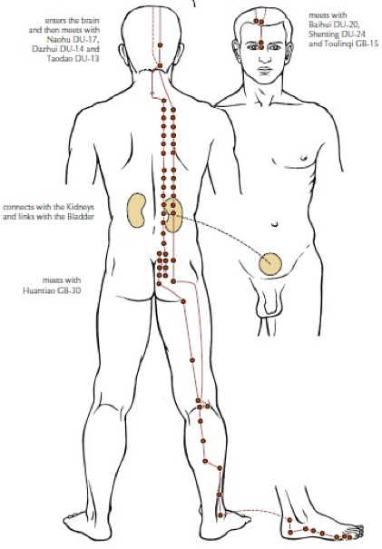 MERIDIAN: Back Pain and the Meridian System
