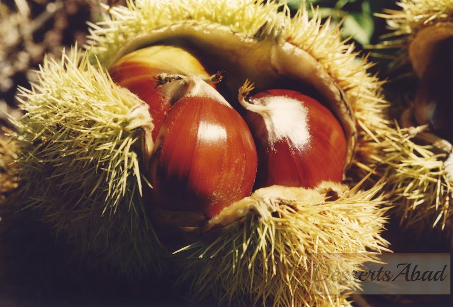 Fruto de la castaña