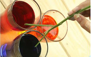 Percobaan Membuat Mawar Warna Warni