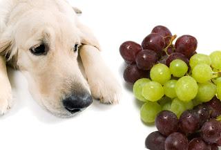 Anggur atau Kismis