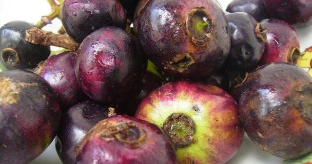 Buah Gowok Atau Kupa Mirip Anggur