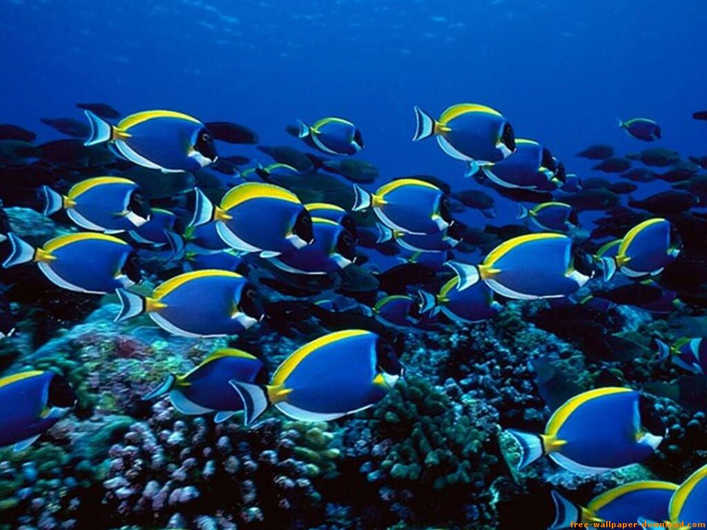 DELIA HERNÁNDEZ/Introspecciones...: El Azul Del Inmenso Mar