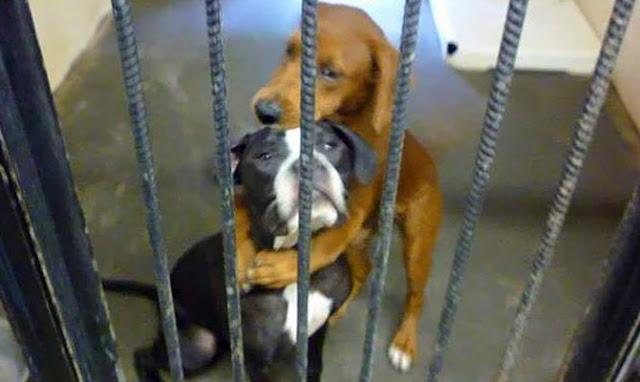 Σκυλίτσα καταφυγίου αγκαλιάζει τον φίλο της λίγες ώρες πριν την ευθανασία και αυτό τους σώζει τις ζωές
