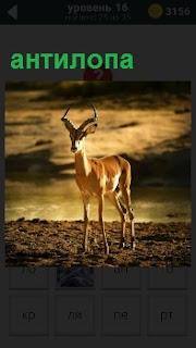На фоне вечернего неба стоит гордая антилопа и смотрит вдаль