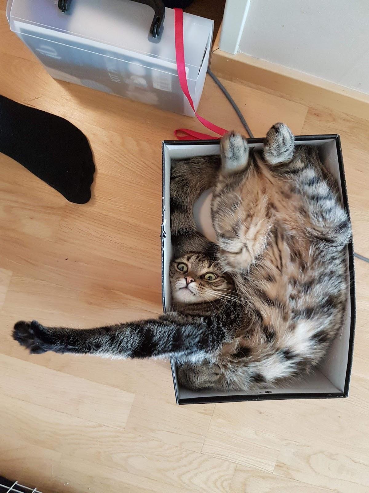 Funny cats - part 235, cat pictures, funny cat images, best cat photos