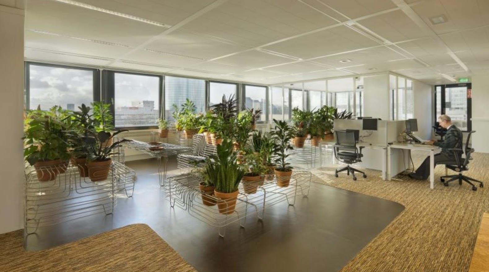Shedworking: Indoor garden office
