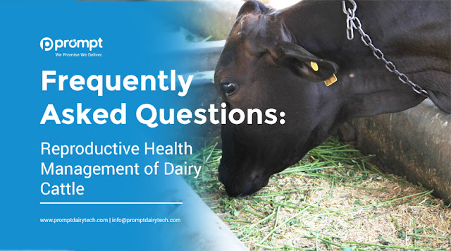 Frequently Asked Questions: Reproductive Health Management of Dairy Cattle