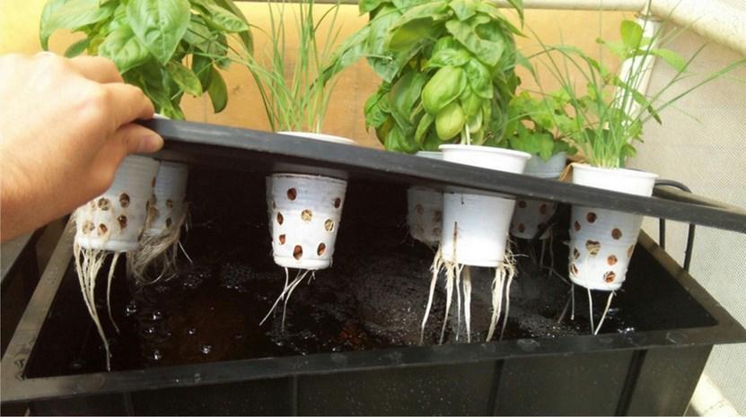Panduan Lengkap Cara Membuat Nutrisi dan Pupuk Hidroponik di Rumah di kebun belakang rumah