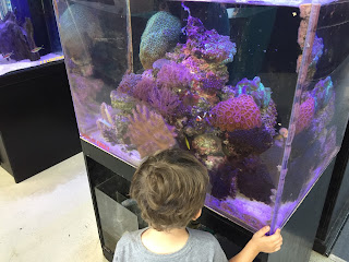 boy looking in a fish tank developing speech and language skills