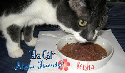 abrir la comida para gatos