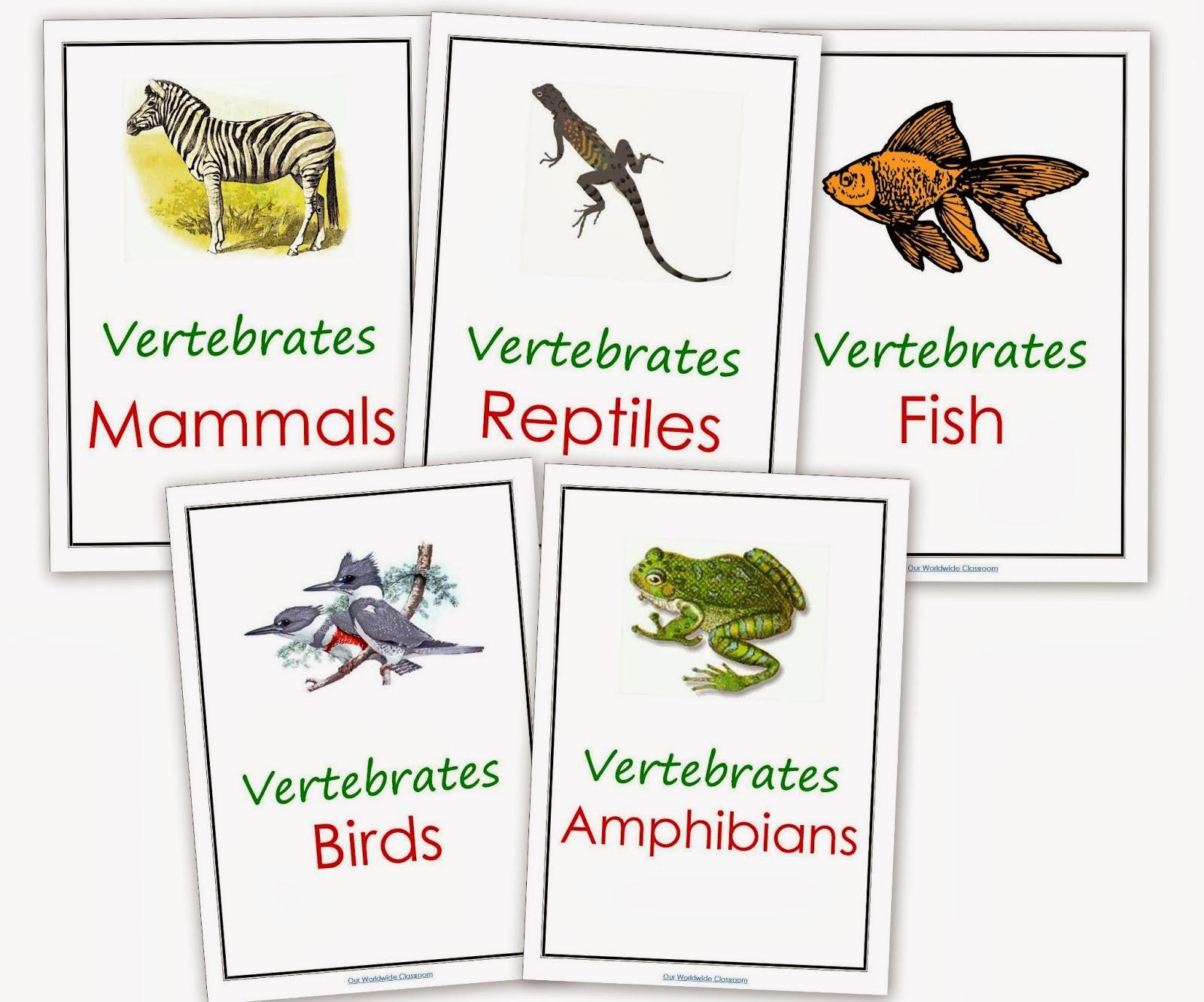 Ceip San Jose De Calasanz Vertebrates And Invertebrates