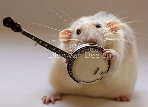 17-The-Banjo-Player-Give-Me-A-Second-To-Figure-It-Out-Musical-Dumbo-Rat-Ellen-Van-Deelen-www-designstack-co