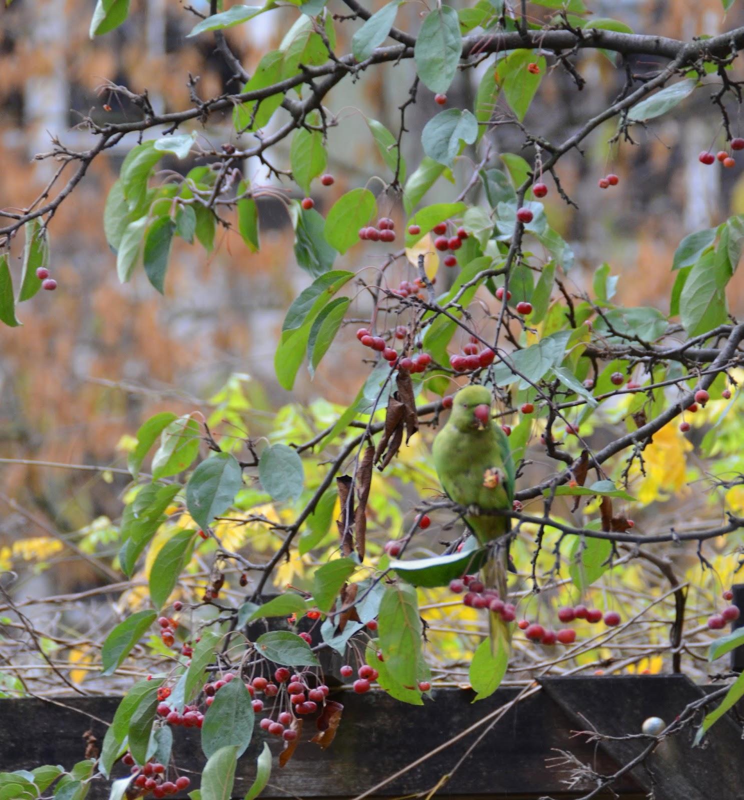 Paris and beyond jardin des plantes un perroquet vert for Jardin des plantes