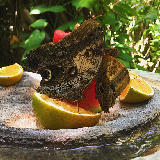 xcaret butterfly pavillion