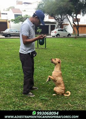 Adiestramiento Canino San Isidro