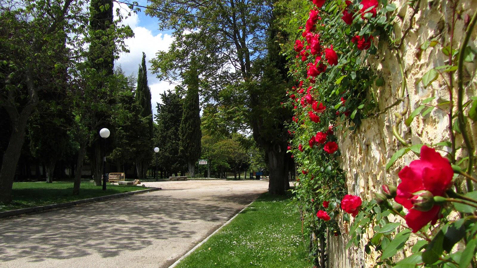 Rosas en el Parque del Castillo_ameiseblog