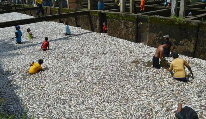 The Big Wobble: 100 TONS of fish (MORE THAN 2 BILLION