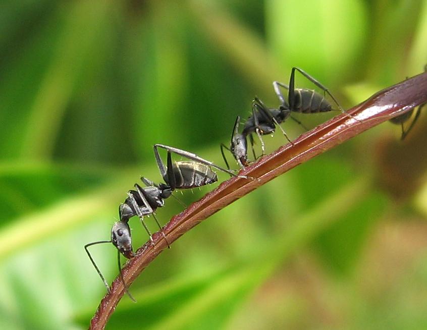 Dwie mrówki, czyli o pracowniku trochę inaczej