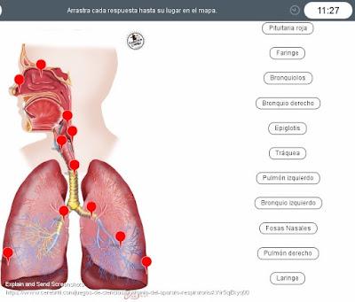 https://www.cerebriti.com/juegos-de-ciencias/anatomia-del-aparato-respiratorio#.Wr5rAkkyq00